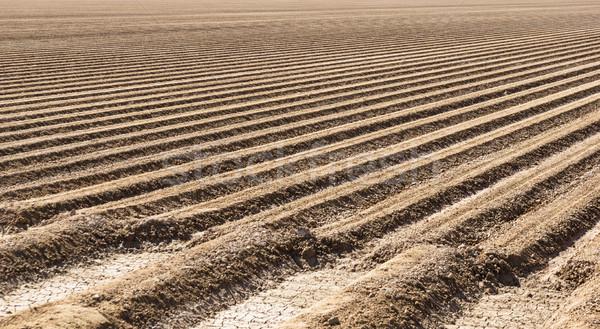 Przygotowany gospodarstwa dziedzinie gleby dolinie sałata Zdjęcia stock © pancaketom