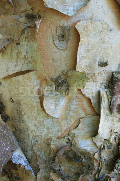 Folyó nyírfa ugatás fatörzs Stock fotó © pancaketom