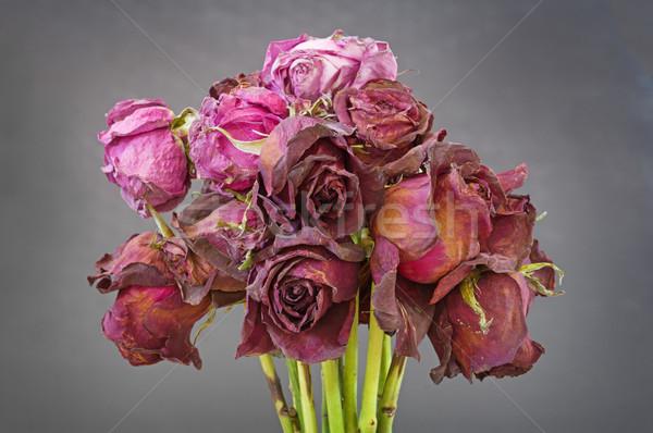 öreg aszalt rózsák köteg halott piros Stock fotó © pancaketom