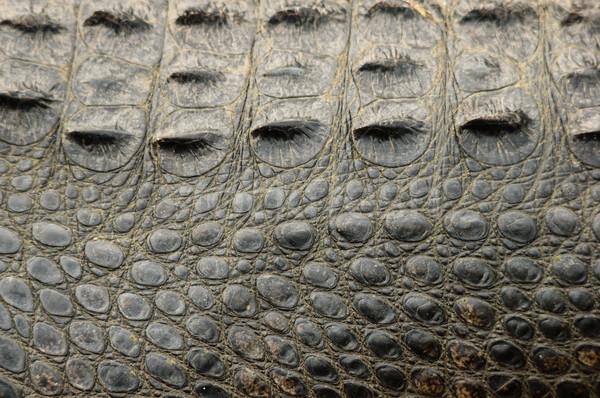 Aligator skóry amerykański tekstury strona Zdjęcia stock © pancaketom