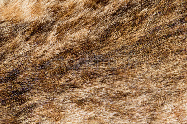 Bobcat Fur Background Stock photo © pancaketom