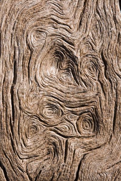 Circular vetas de la madera macro capeado madera fondo Foto stock © pancaketom