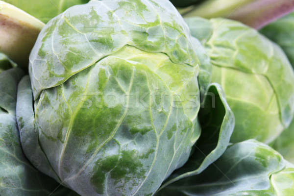 brussel sprout macro Stock photo © pancaketom