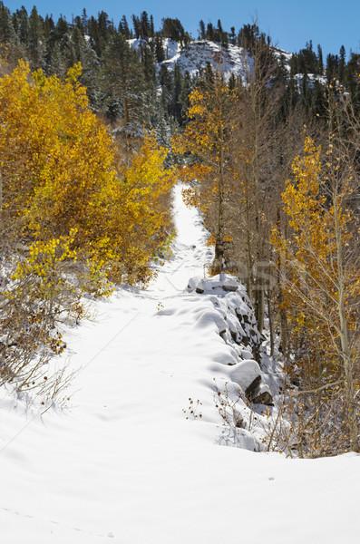 Snowy Path Stock photo © pancaketom