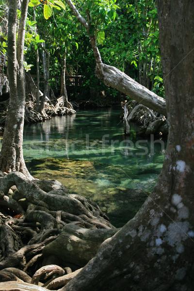 Védtelen gyökerek dal kék folyam víz Stock fotó © pancaketom
