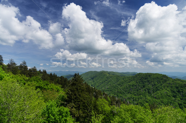 Great Smoky Mountains Stock photo © pancaketom