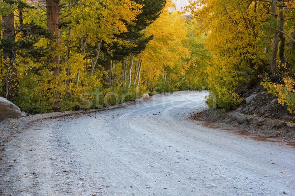 Fall Aspen Road Stock photo © pancaketom