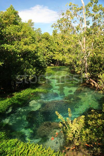 Tha Pom clear tropical stream Stock photo © pancaketom