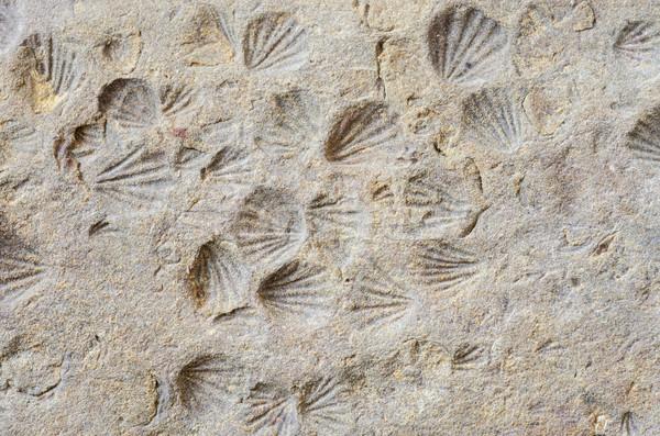 Kagyló kicsi lenyomat háttér kő makró Stock fotó © pancaketom