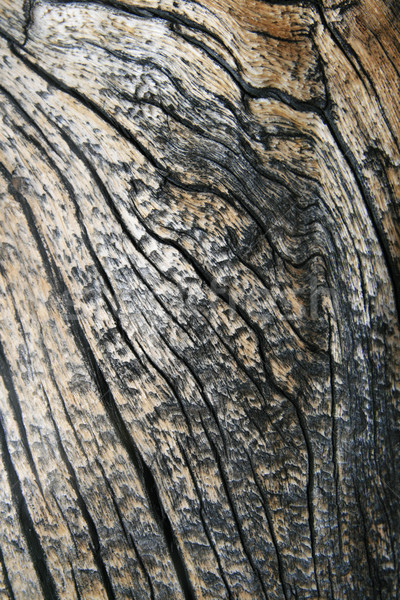 cracked wood grain Stock photo © pancaketom