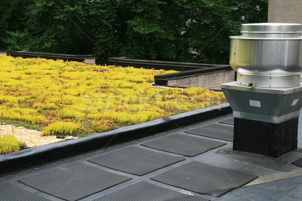 partial green roof Stock photo © pancaketom