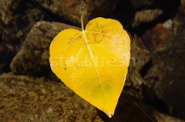 Heart Shaped Fall Leaf Stock photo © pancaketom