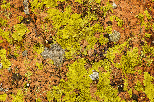 покрытый рок красочный текстуры желтый природного Сток-фото © pancaketom