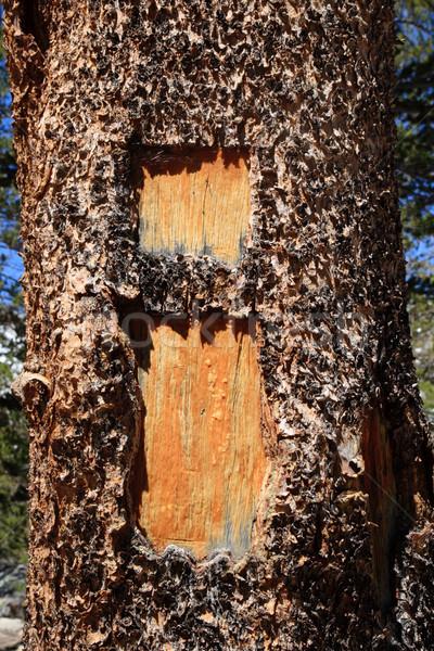 i blaze on tree Stock photo © pancaketom
