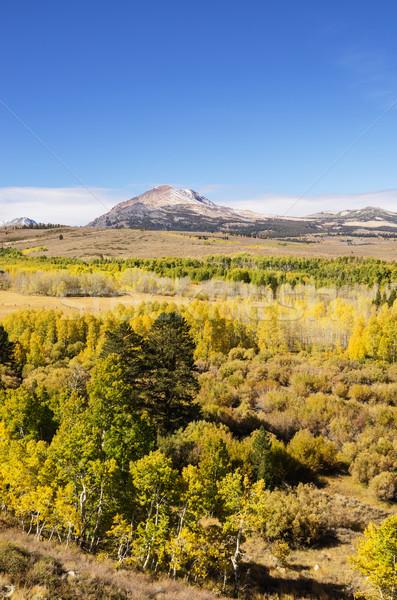 Eastern Sierra Aspen Color Stock photo © pancaketom