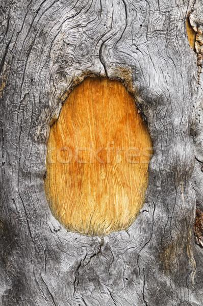 Wood Tree Trunk Frame Stock photo © pancaketom