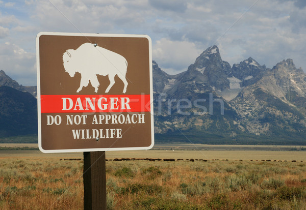 danger wildlife sign Stock photo © pancaketom