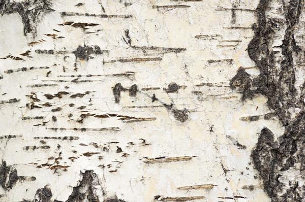 Schors foto boom textuur achtergrond zwarte Stockfoto © pancaketom