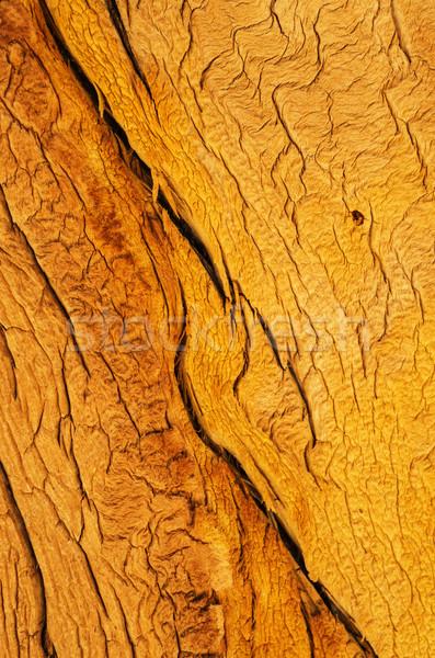 Wood Grain Stock photo © pancaketom