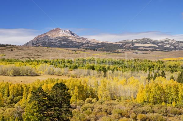 Yellow Fall Aspen Trees Stock photo © pancaketom
