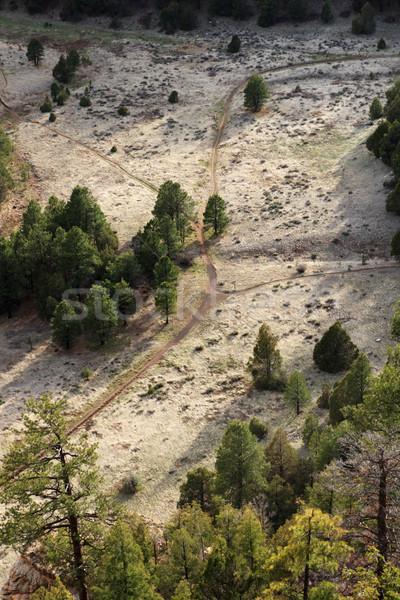 Nyom kereszteződés fölött többszörös legelő fenyőfa Stock fotó © pancaketom