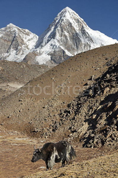Yak And Mountain Stock photo © pancaketom