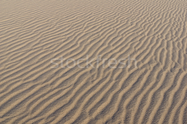 Desert Sand Ripples Stock photo © pancaketom
