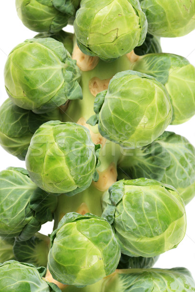 brussel sprout stalk Stock photo © pancaketom