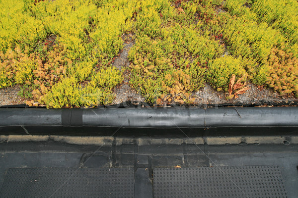 partial green roof detail Stock photo © pancaketom