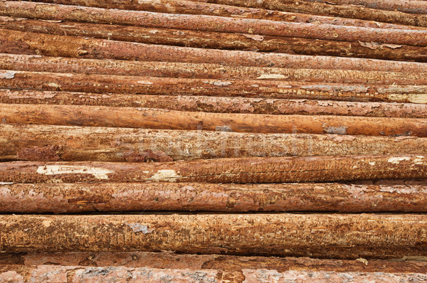 Lumber Logs In A Pile Stock photo © pancaketom