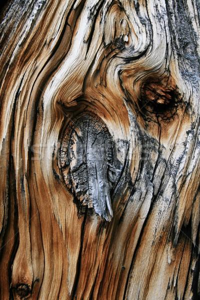 ölü ağaç düğüm çam ahşap eski şube Stok fotoğraf © pancaketom