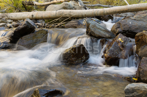 Aspen Stream Stock photo © pancaketom
