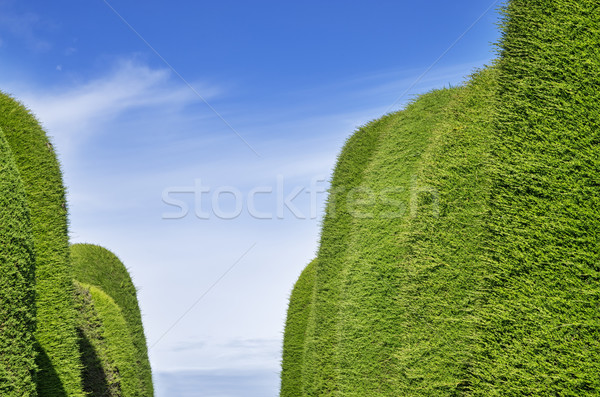 зеленый проход небе ярко Сток-фото © pancaketom