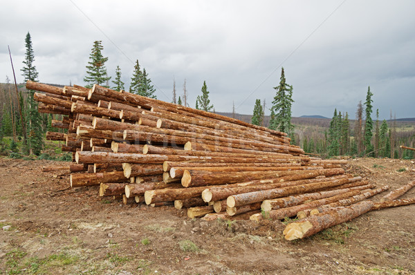 Stacked Logs Stock photo © pancaketom