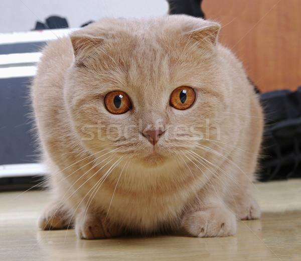 ストックフォト: 赤 · 猫 · 座って · 階 · 自然 · 背景