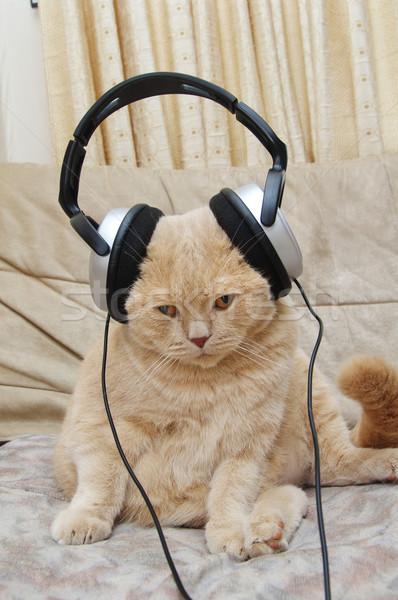 Cute kitten hoofdtelefoon vergadering bank luisteren Stockfoto © papa1266