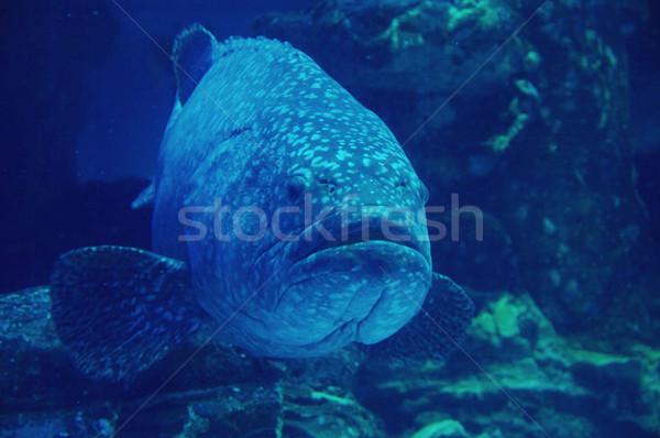 Bodem zee vis onderwater dier vakantie Stockfoto © papa1266