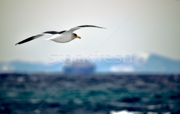 Mouette vol mer cargo soleil sport Photo stock © papa1266