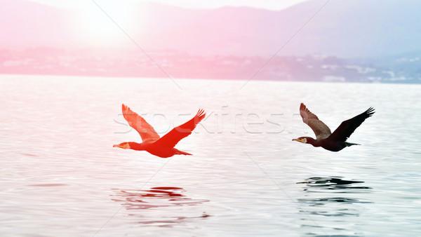 Vliegen water twee zonsondergang wolken zee Stockfoto © papa1266