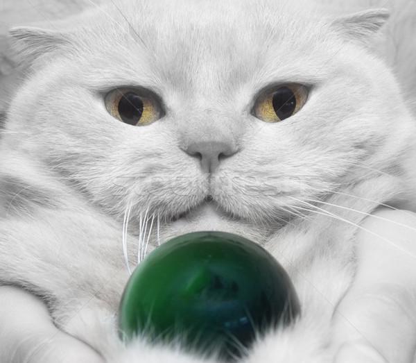 Közelkép fehér macska kő macskák szem Stock fotó © papa1266