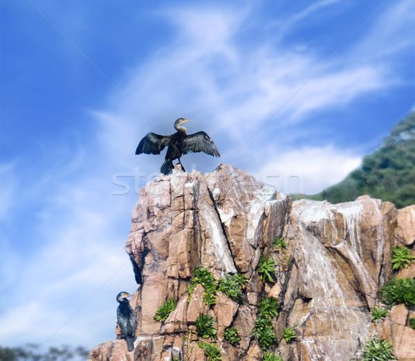 Cormorant sitting on a rock Stock photo © papa1266