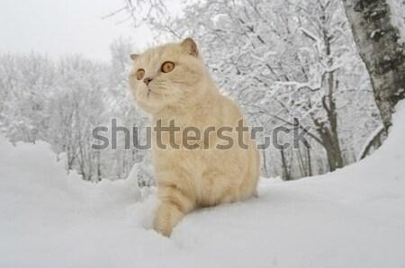 Kat lopen sneeuw ogen achtergrond witte Stockfoto © papa1266