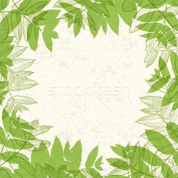Green leaves frame on paper texture. Vector illustration, EPS10. Stock photo © pashabo
