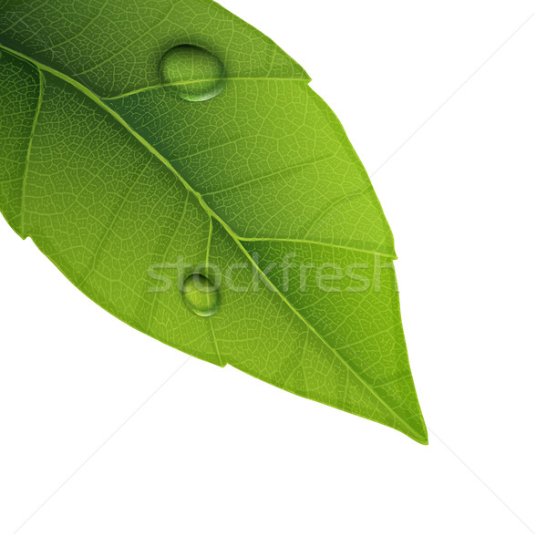 Green leaf with water droplets, closeup vector illustration. Stock photo © pashabo