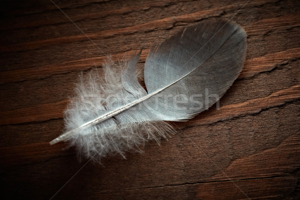 Pigeon feather on the old wood texture. Stock photo © pashabo