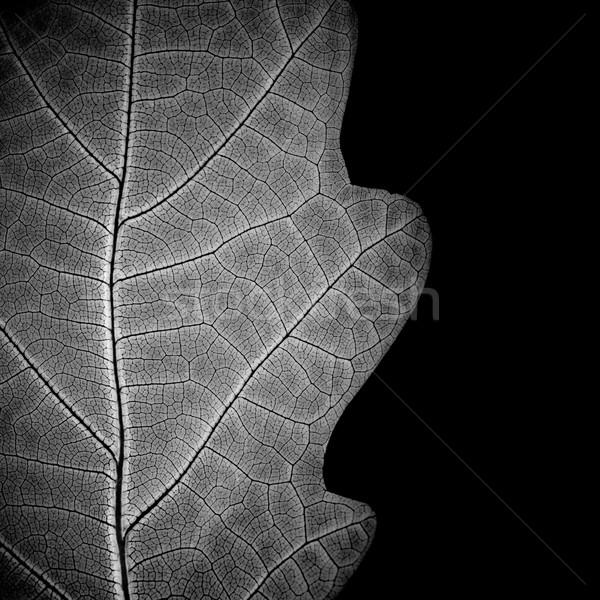 Yaprak damarlar tek renkli doku doğa Stok fotoğraf © pashabo