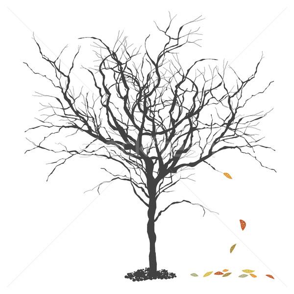 Autumn tree. Fall. Season concept illustration Stock photo © pashabo