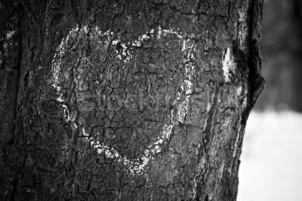 Heart drawn on tree trunk Stock photo © pashabo