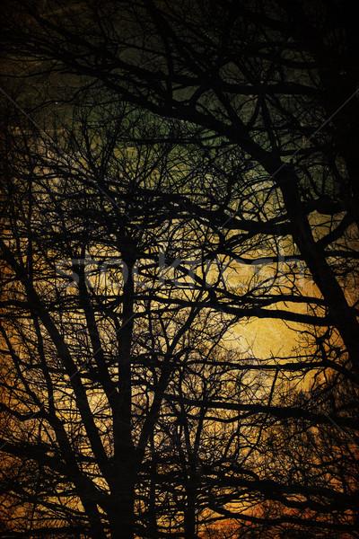 Spooky trees silhouettes. Vintage background Stock photo © pashabo