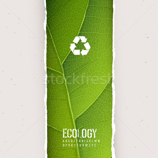 зеленый лист текстуры рваной бумаги рециркуляции символ вектора Сток-фото © pashabo